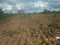 fazenda 100 ha joao pinheiro mg 380 mil