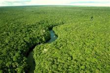 400.000 hectares de Floresta Amazônica
