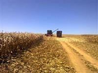 Fazenda Para Lavoura com 420ha com Pivô para Irrigação