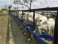 Fazenda em Formosa - GO com 424Ha