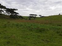 Fazenda na Coxilha Rica com vocação para invernar gado, com 400 HC em Lages SC