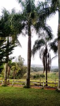 Gel para formação de mudas e plantio seringueira, eucalipto, teca, pinhão, guanandi, café, cana