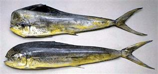 Compro Peixe