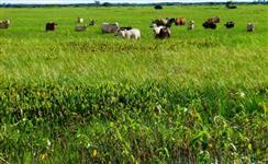 oportunidade fazenda em Poconé apenas 800 reais o hectare