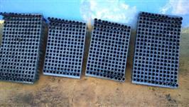 Bandejas planas para mudas de eucalipto em tubetes
