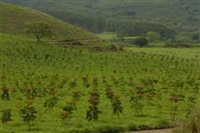 fique rico, invista em plantio de mogno africano, implantamos o seu projeto