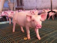Procuro Frigorifico para venda de carne ou integração