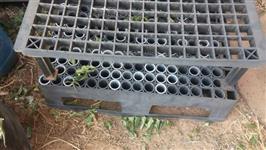 BANDEJA EUCALIPTO USADA 187 TUBETES INCLUIDOS ( EXCELENTE ESTADO)