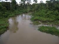 Áreas de floresta no Acre