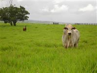Credito e Consorcio rural
