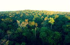 �rea no Amazonas com ICMBIO de 30 mil a 800 mil hectares