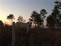 Fazenda de gado e granja avicula