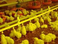 Nipel para aviário, nebulizador, comedouros
