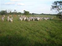 Fazendas Agropecuária e Plantio Tocantins