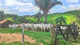 Fazenda 110 Alqueires