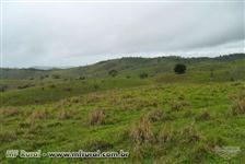 Fazenda em Ibicuí com 892ha