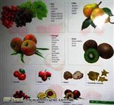 Mudas Frutiferas