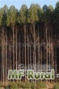 floresta espetacular de eucalipto em goiania ponto de corte 36 meses idade