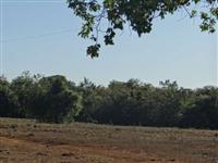 Produção de grãos em 100% da área próximo a capital Palmas