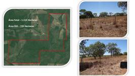 Fazenda de Médio Porte (Agricultura + Pecuária) - Tocantins