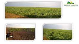 Fazenda Arrendamento - 2.140 Hectares