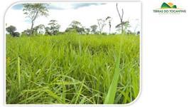 Fazenda Para Soja - Tocantins (Chuva 2.200 mm)