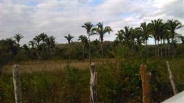 Arrendo 120 há de terra para lavouras no Maranhão