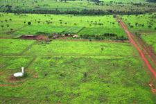 Fazenda com multiplas aptidões! Planta 98%!