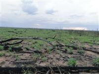 Fazenda a venda no Mato Grosso. Negocia toda ou parde dela