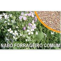 Semente de Nabo Forrageiro
