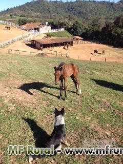 Venda de Cavalos