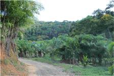 Sitio com 440.000 m2,  com 47.000 pes de Palmito Pupunha