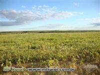 Fazenda entre Uberlândia e Uberaba, BR-050