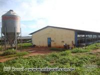 Granja de suínos e aves no Triângulo Mineiro