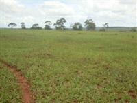 Fazenda para cana, próximo a Ituiutaba