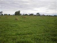 Fazenda para cana em Ituiutaba