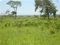 Fazenda para lavoura, irrigação