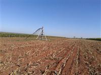 Fazenda irrigada com 3 pivôs centrais, Triângulo Mineiro