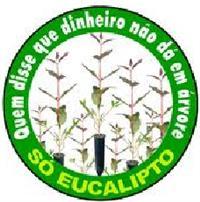 mudas eucalipto citriodora urograndis