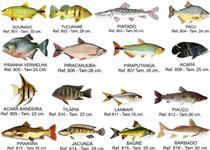 vendas de  filhote de peixes de todas as especies