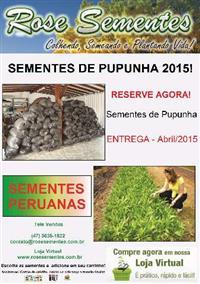 MUDAS DE PALMEIRAS ORNAMENTAIS