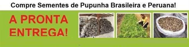 SEMENTES DE PUPUNHA PERUANA!