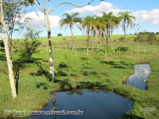 Sítio na rodovia Jaú/Brotas - SP, em Jaú, com 8 alqueires