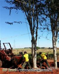 Mudas de Árvores Nativas para todo o Brasil