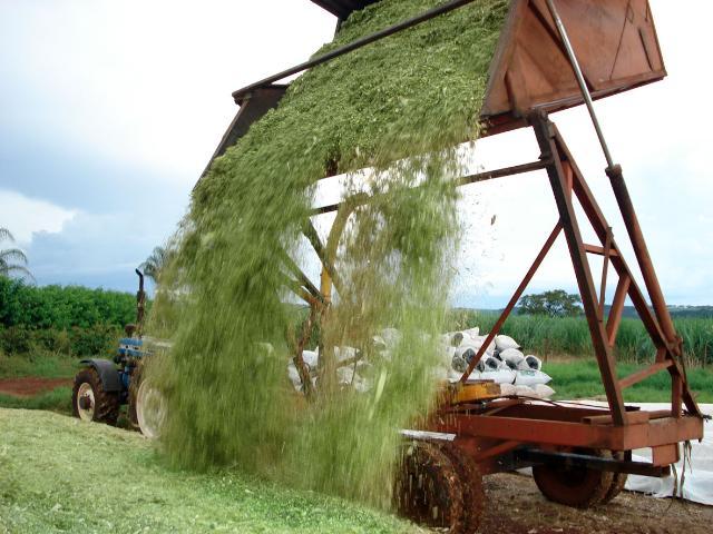 Silagem de milho