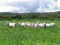 NUTRI PASTO - Explosão de Crescimento na Pastagem