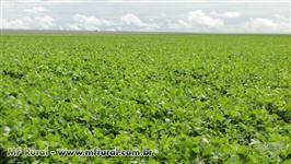 Fazenda de 3500 ha no oeste da bahia