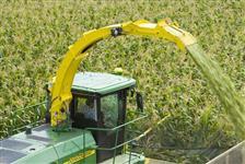 Silagem de milho á granel ou ensacada