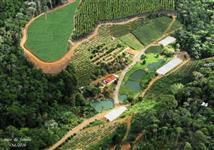43 hectares, 2 Casas, 3 nascentes, 55 mil pés de café arábica, eucalipto