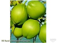 Distribuidor de Coco Verde